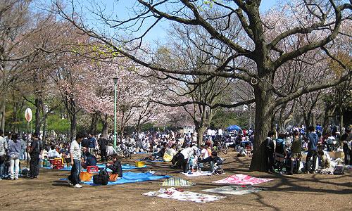札幌円山公園の桜 2010