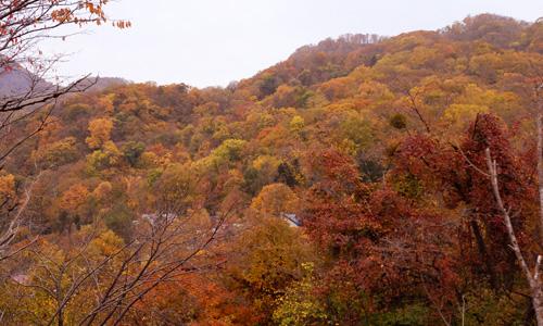 札幌市内の紅葉004