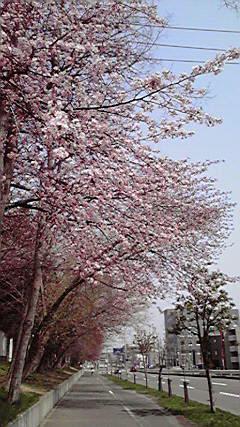 09_cherry_001